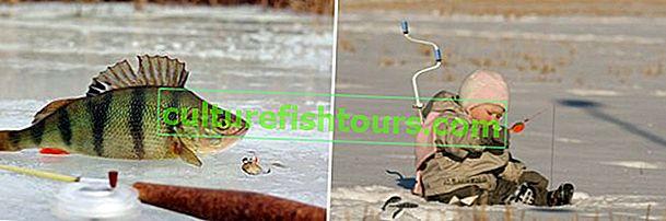 Bir jig ile kışın levrek balıkçılığı