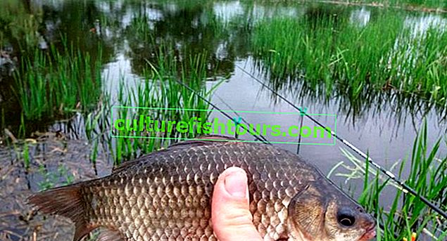 Pecanje šarana ljeti plutajućom šipkom