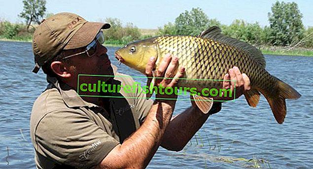 Риболовля в Омську на Іртиші