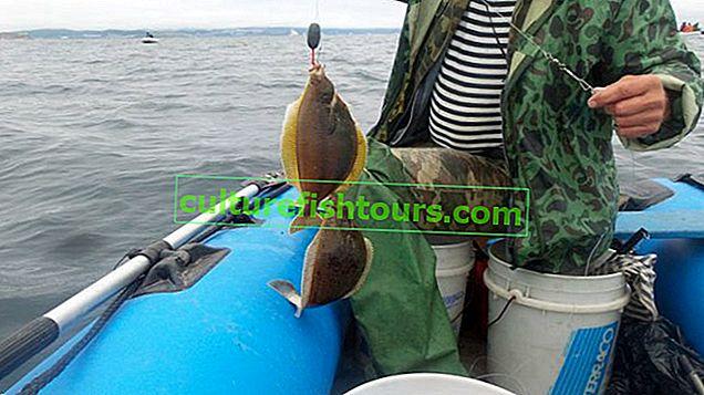 Pisi balığı - habitat ve balıkçılık