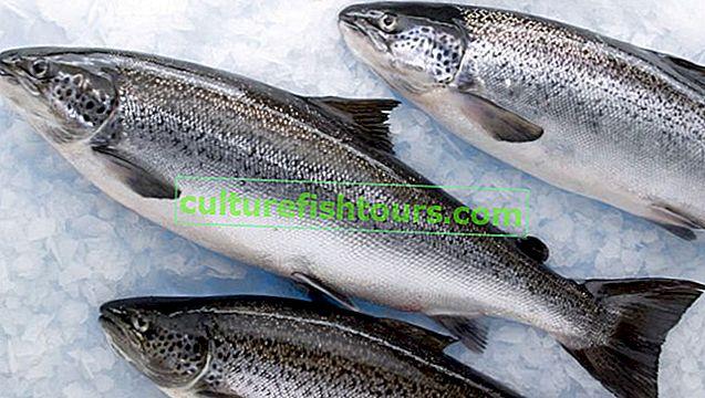 Výhody a poškození lososa
