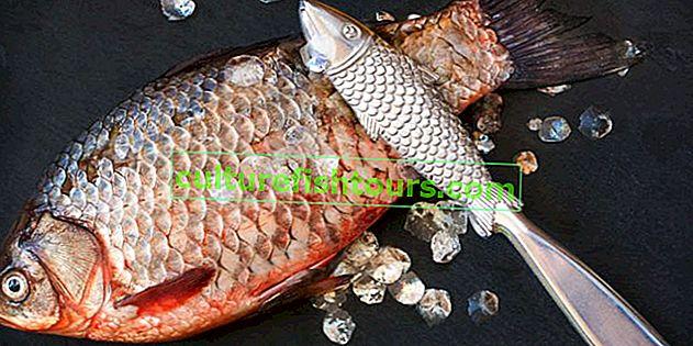 Чістілка для риби