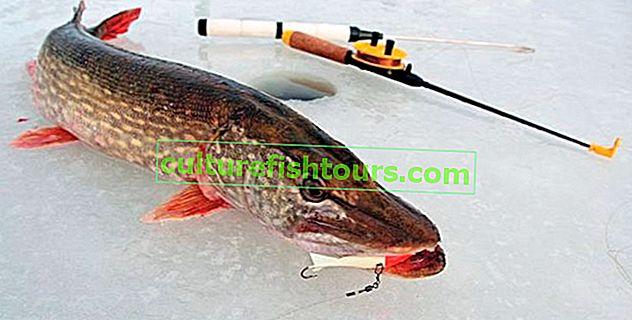 Ribolov štuke zimi na balanseru