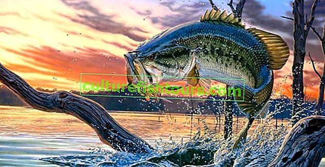 Mevsime göre balık ısırığı tahmini