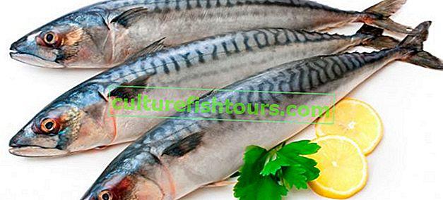 Wie man Makrelen zu Hause salzt