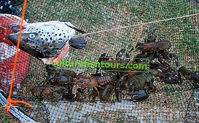 Ловля раків раколовки