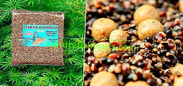 Konopná semínka: skvělá návnada a návnada