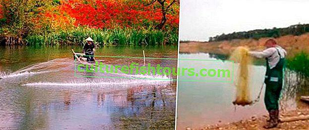 Ağ balıkçılığı döküm