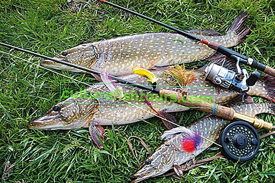 Łowienie szczupaków w wodach otwartych jesienią i latem