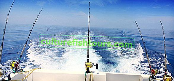 Trol balıkçılığı