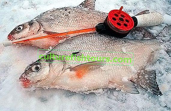 Риболов на плотва през зимата
