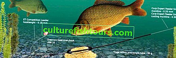 Риболов на шаран с фидер